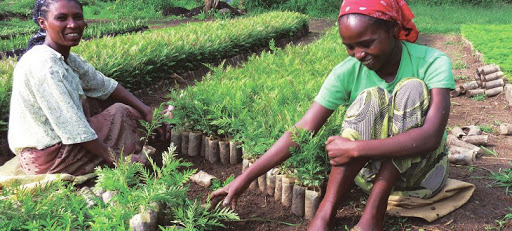 Green Ethipia - Local people in agricultural practices